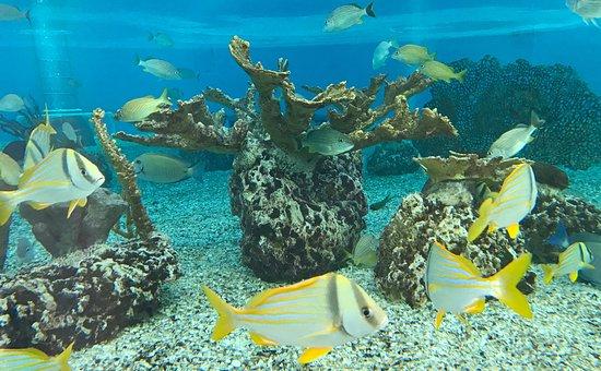 saint-augustine aquarium