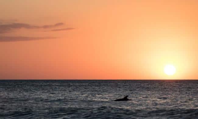 sunset boat cruise - st augustine fl