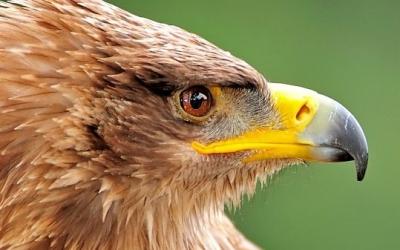 birds-of-prey-header-e1534441606713