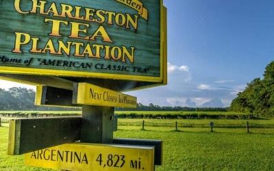 charleston-tea-plantation-e1534442737940
