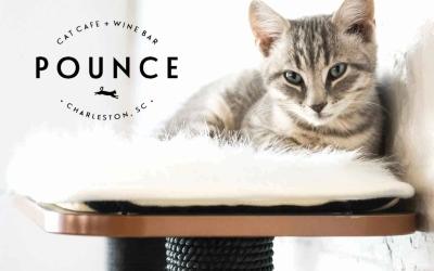 pounce cat cafe, savannah